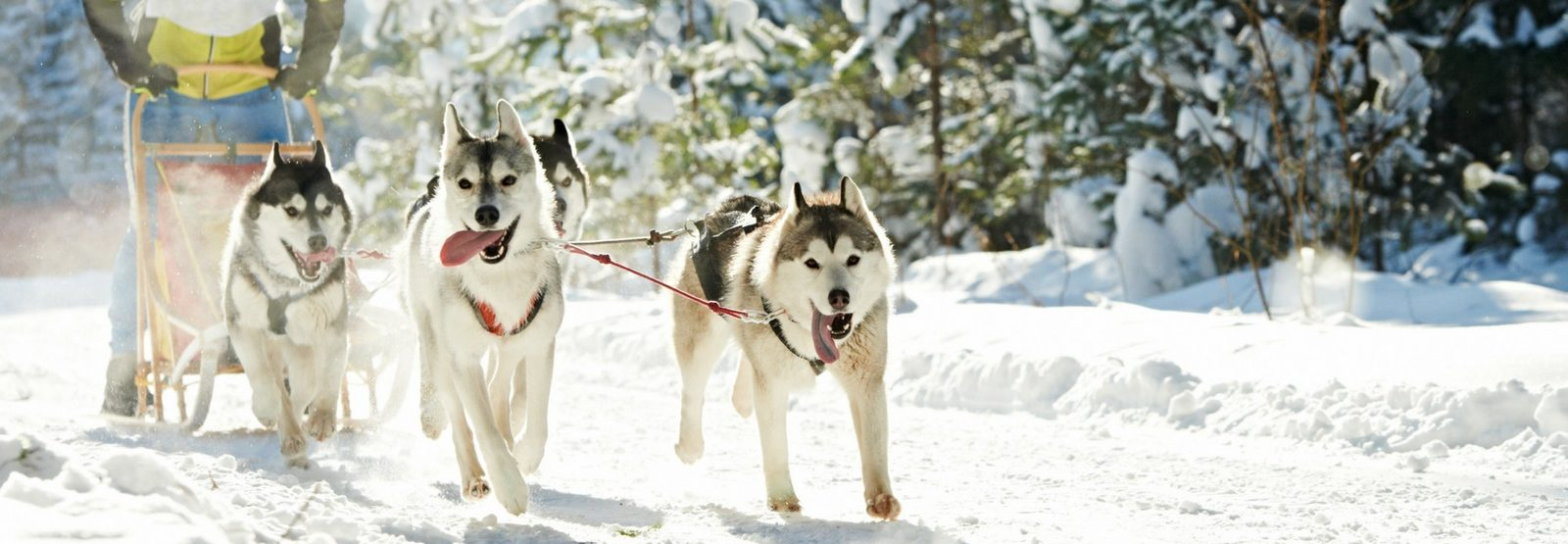 Dog & Reindeer Sledding Adventure Holiday Another World Adventures