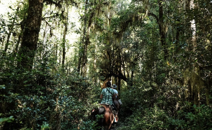 Horse riding across the Andes - the Puelo Ride_The rain forest_VEN106