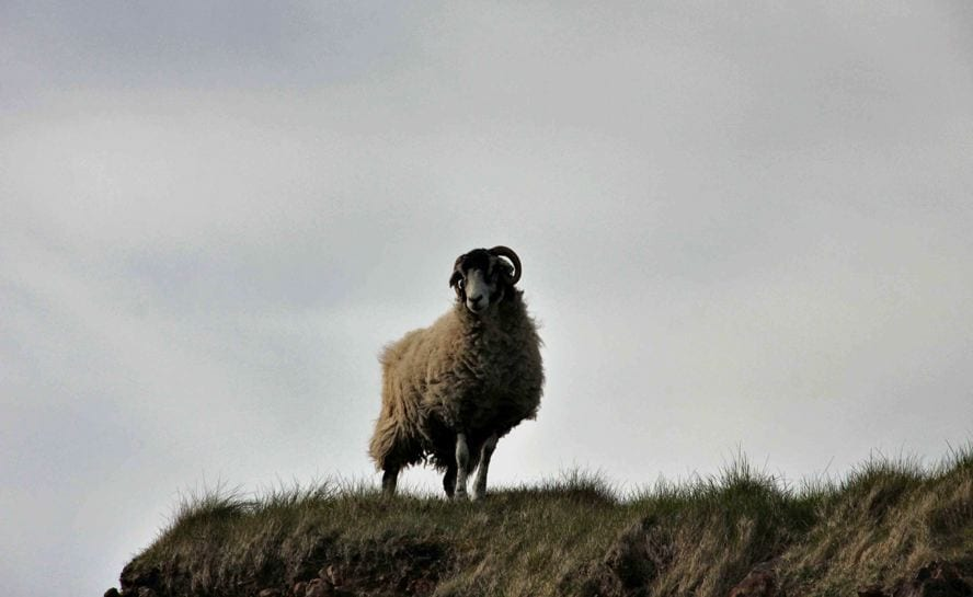 Orkney Sagas 2