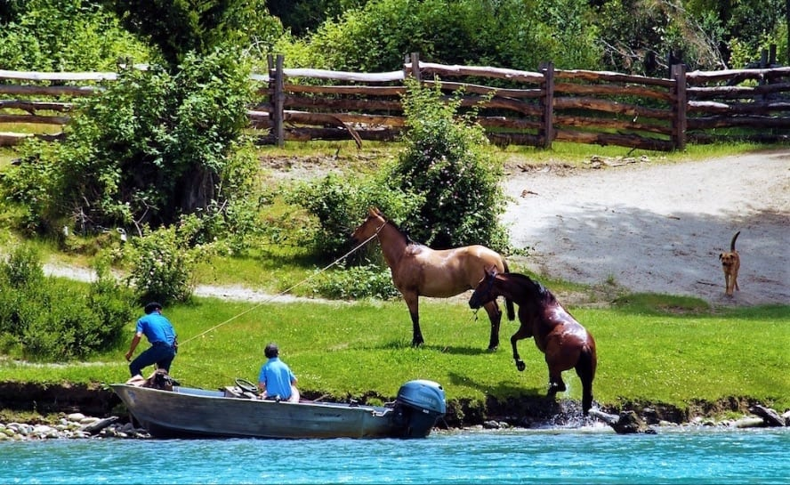 Patagonia horse riding_andean crossing_VEN89_Crossing horses-1