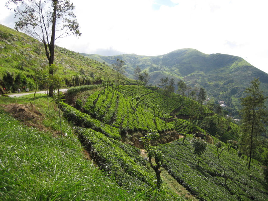 3. Kandy tea country