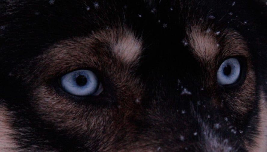 Finnish-Dogsledding-Adventure-another-world-adventures-image-3