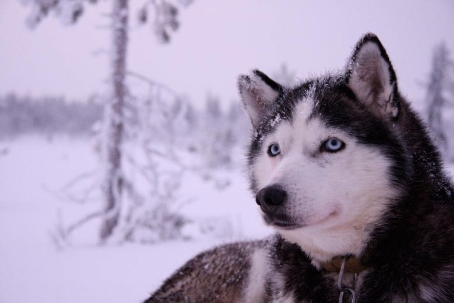 Finnish-Dogsledding-Adventure-another-world-adventures-image-5