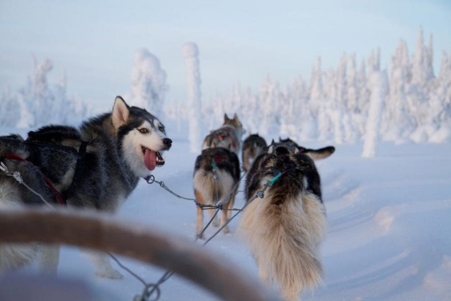 Finnish-Wilderness-Week-another-world-adventures-image-2