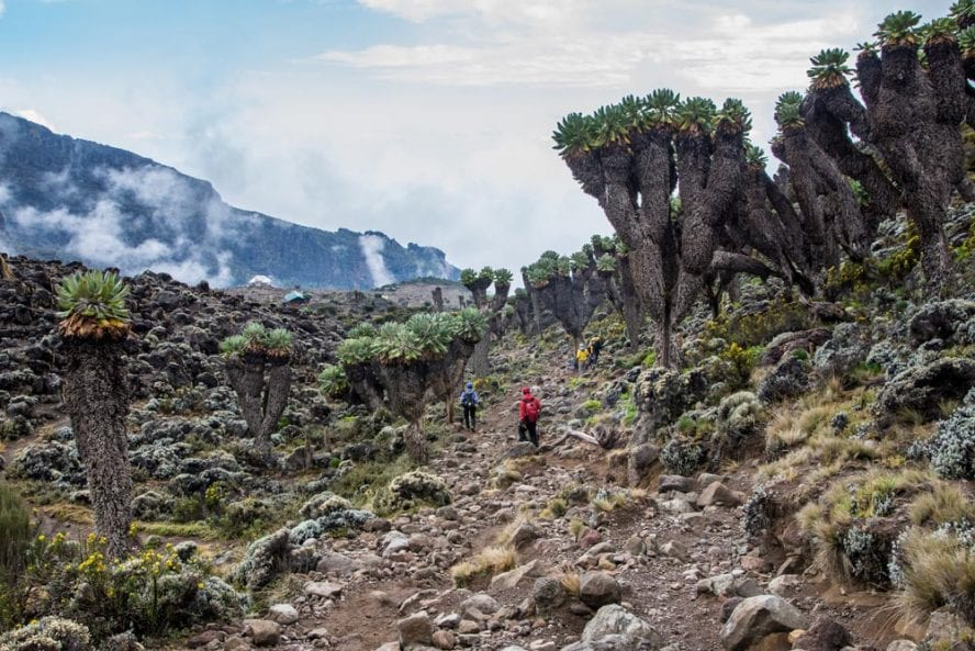 Kilimanjaro-Climb-Lemosho-Route-another-world-adventures-image-10
