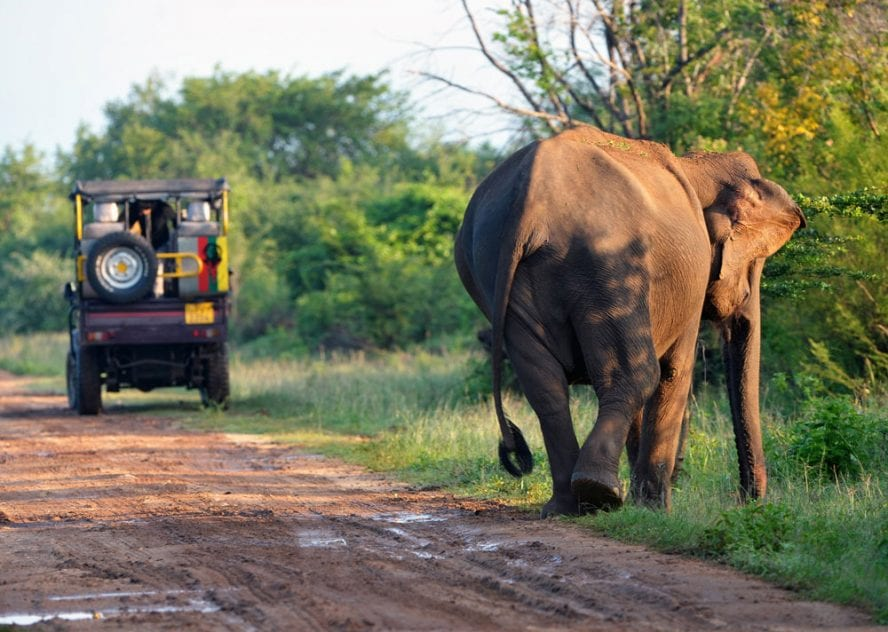 Sri-Lanka-Mixed-Activity-another-world-adventures-image-4