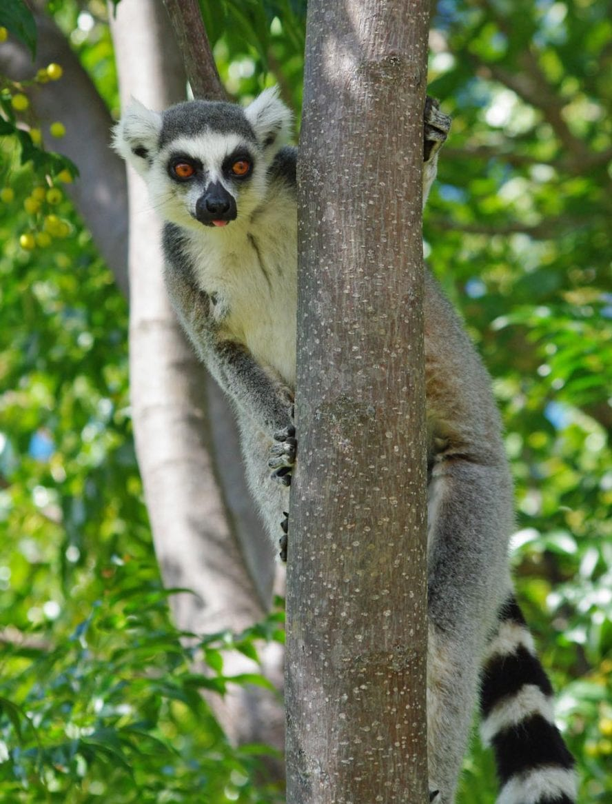 Trekking-in-Madagascar-another-world-adventures-image-5