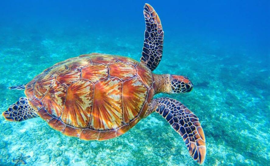 turtle 888