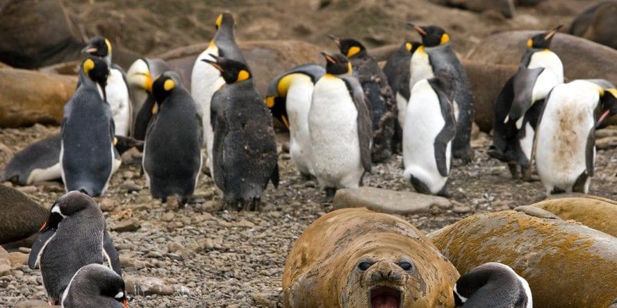 Sail Antarctica – Another World Adventures (3)