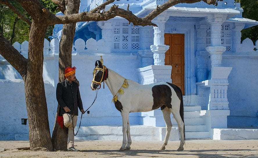 Horse-India-Festive-Pal-13