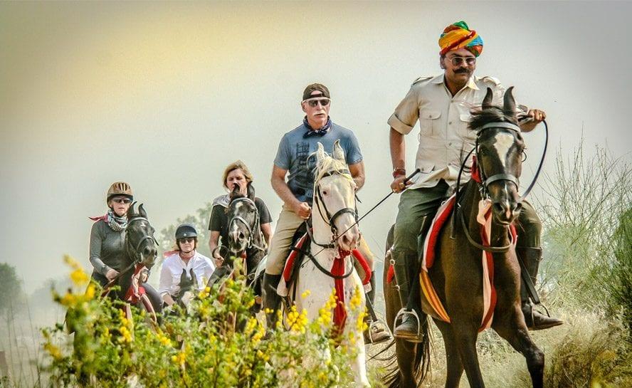 Horse-India-Festive-Pal-6