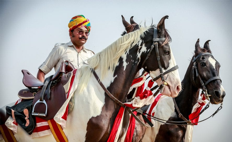 Horse-India-MMarwar-2-Marwar horse riding adventure